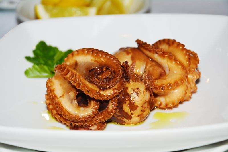 Fish food. Octopus. Tasteful fish. Octopus food on a white plate in restaurant, in orange and brown hues for celebration. Fish food background, close up royalty free stock photo