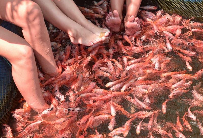 Fish foot spa stock image image of gold aquatic life for Fish foot spa
