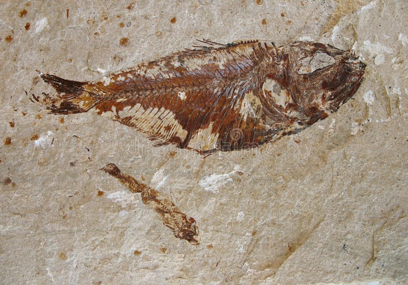 Fish Fossil 2 royalty free stock image