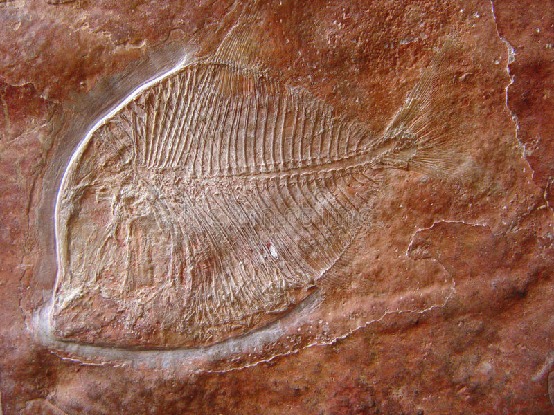 Fish fossil. 120 million year-old fish fossil, middle Cretaceous, Mesozoic era royalty free stock image