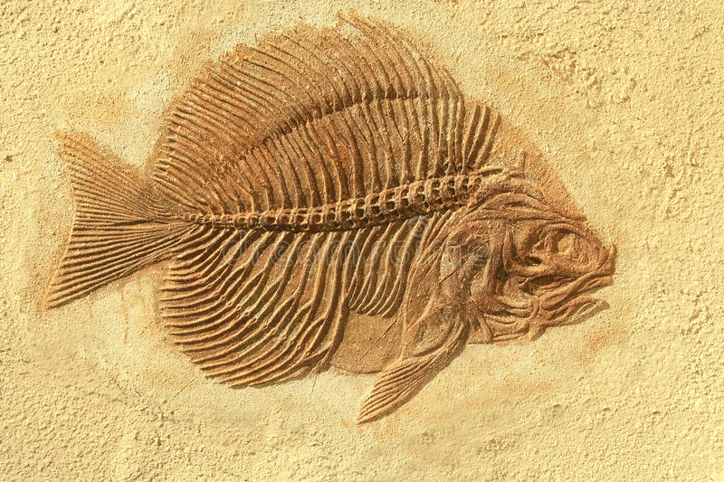 Fish fossil royalty free stock photos