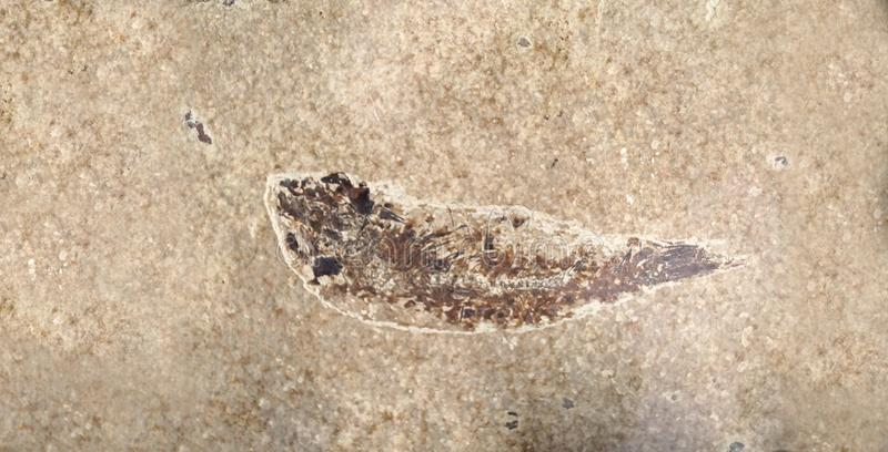 Fish fossil in a stone block royalty free stock photos