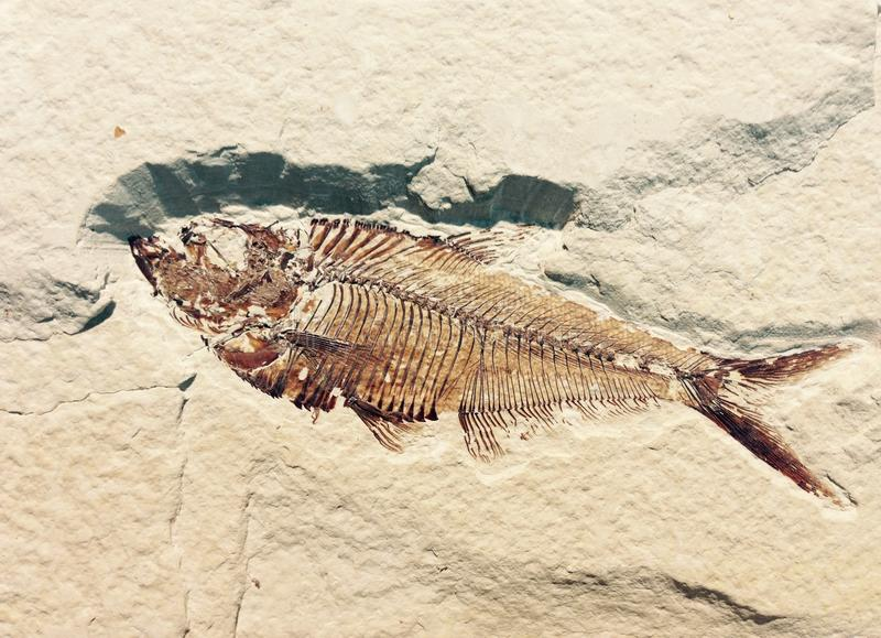 Fish fossil in a wall royalty free stock image