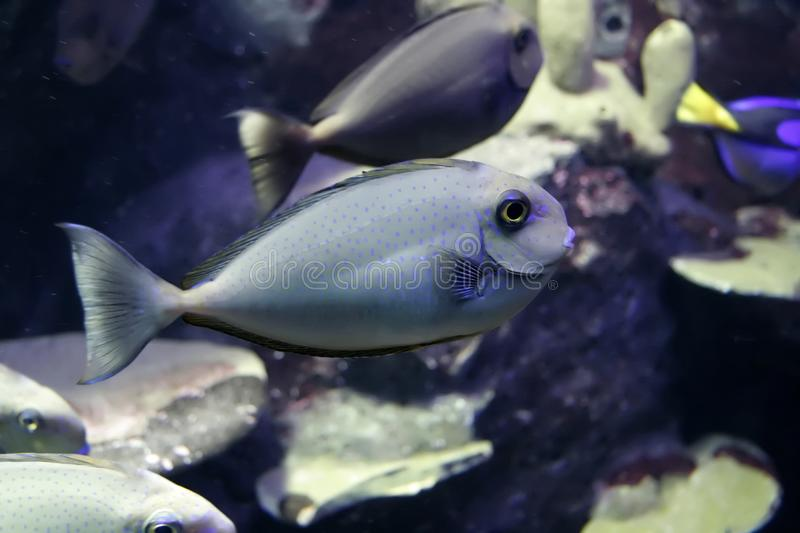 Fish with friends royalty free stock image