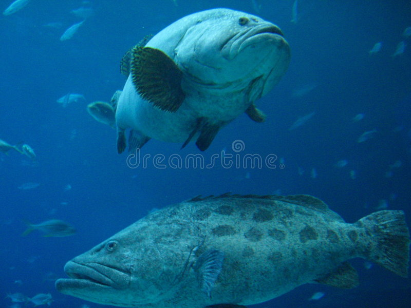 Fish Friends royalty free stock image
