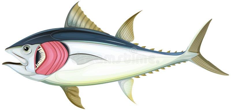 Fish Gills Stock Illustrations 1 474 Fish Gills Stock Illustrations Vectors Clipart Dreamstime
