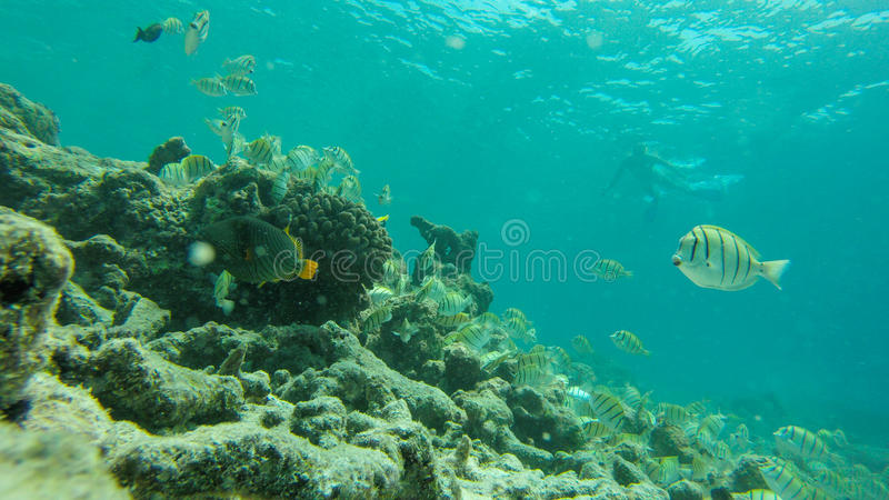 Snorkeling in indian ocean royalty free stock photography