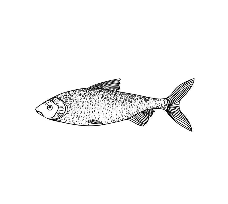 Fish. Hand drawn engraving seafood icon. stock illustration