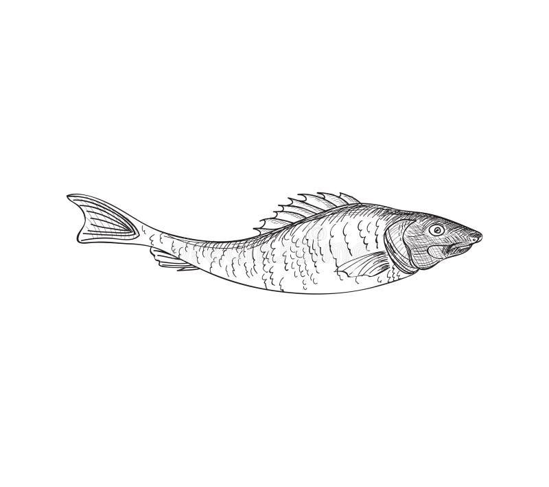 Fish. Hand drawn engraving seafood icon. royalty free illustration