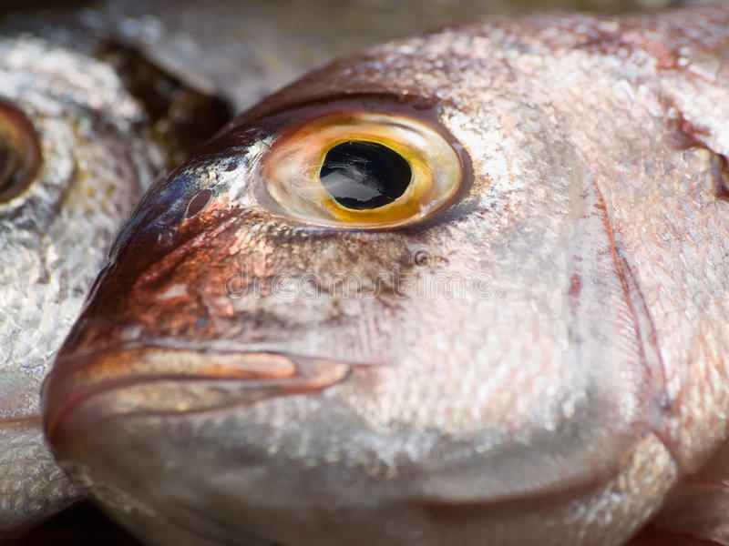 Download Fish Head Royalty Free Stock Image - Image: 16255716