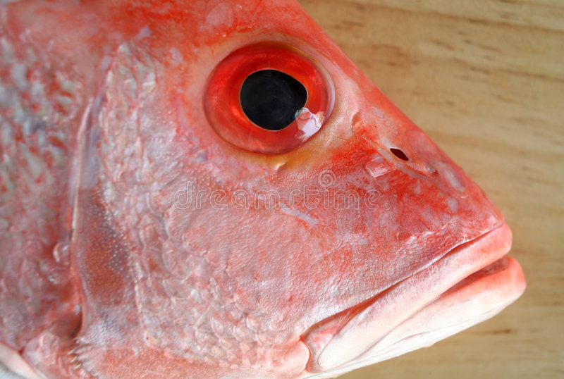 Fish Head Royalty Free Stock Photography