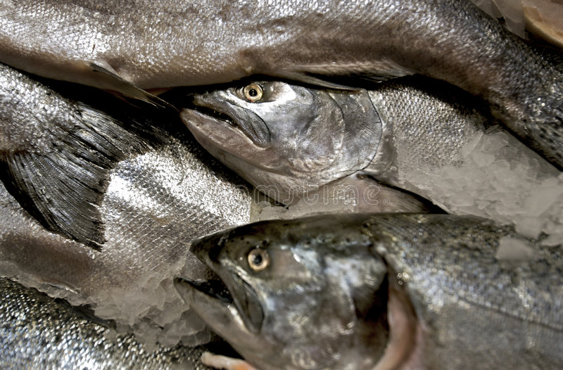 Fish heads stock images