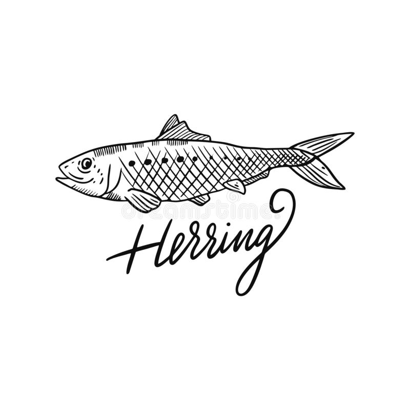 Fish Herring. Hand drawn vector illustration. Engraving style. Isolated on white background. Design for seafood market, package, poster, banner, t-shirt royalty free illustration