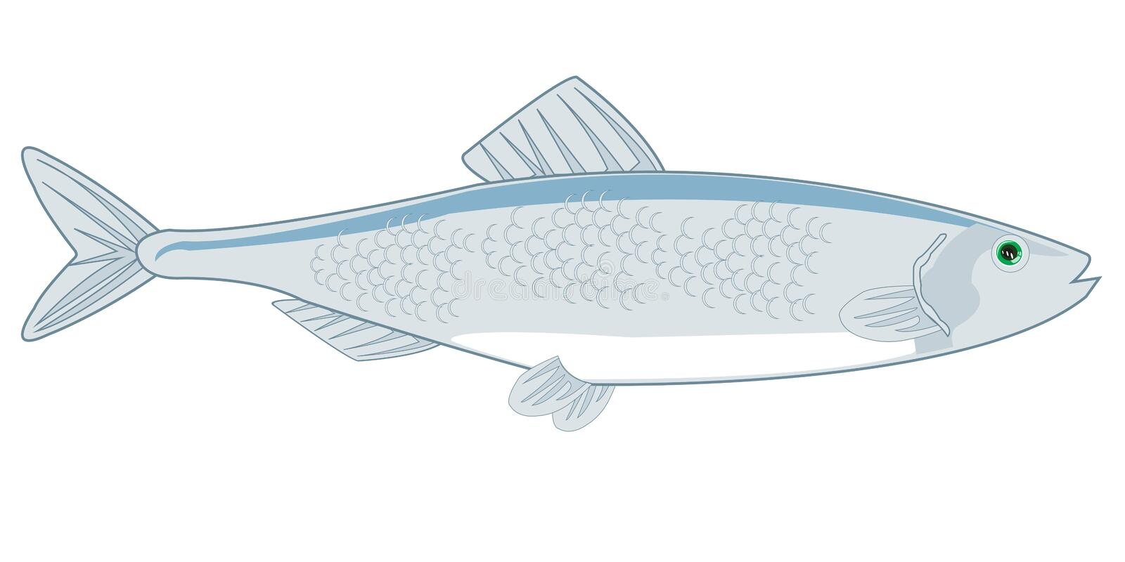 Fish herring on white background is insulated. Vector illustration of the cartoon of sea commercial fish herring vector illustration