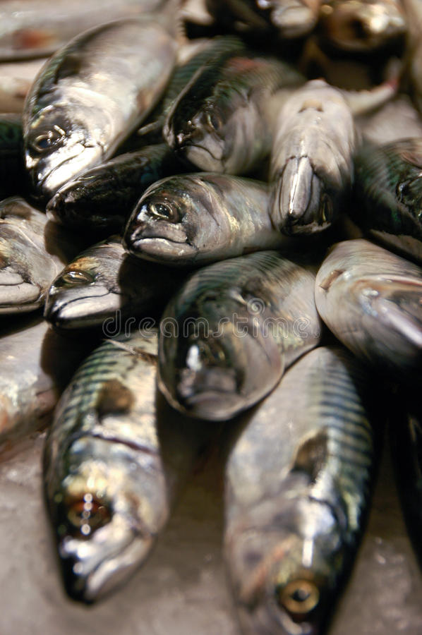 Download Fish On Ice Royalty Free Stock Photography - Image: 11745577