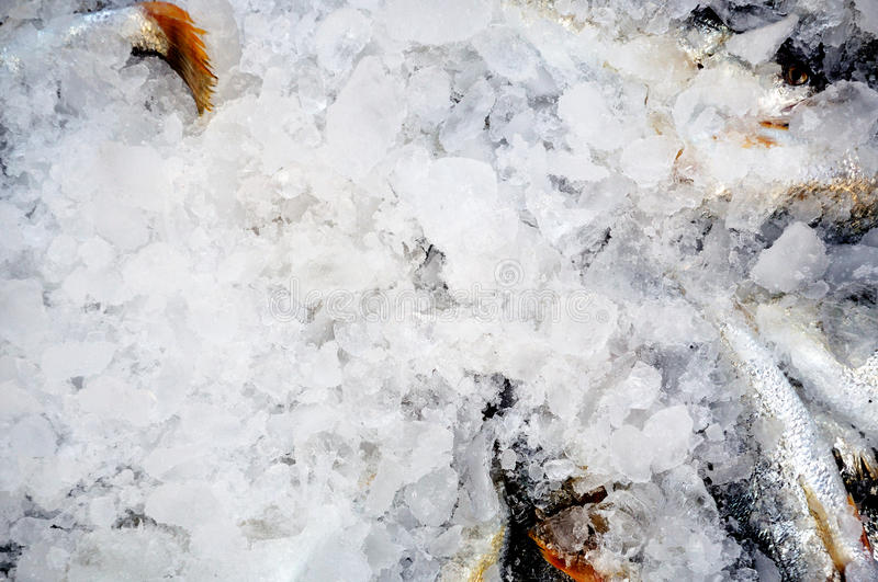Fish in ice. Fresh fish in ice just to land will go to market royalty free stock photo