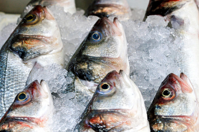 Fish in ice. Freshly caught fish in ice on market royalty free stock photography