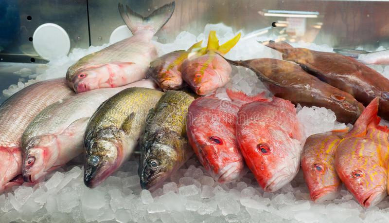 Download Fish on ice stock image. Image of chilled, heads, assortment - 25564695