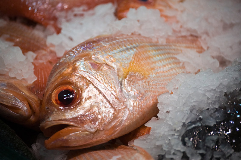 Fish on ice. In a seafood market store stock photography