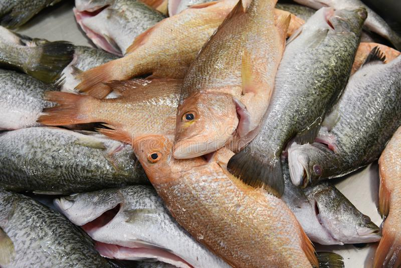 Fish on ice. Assortment of fresh fish on ice in a market royalty free stock image