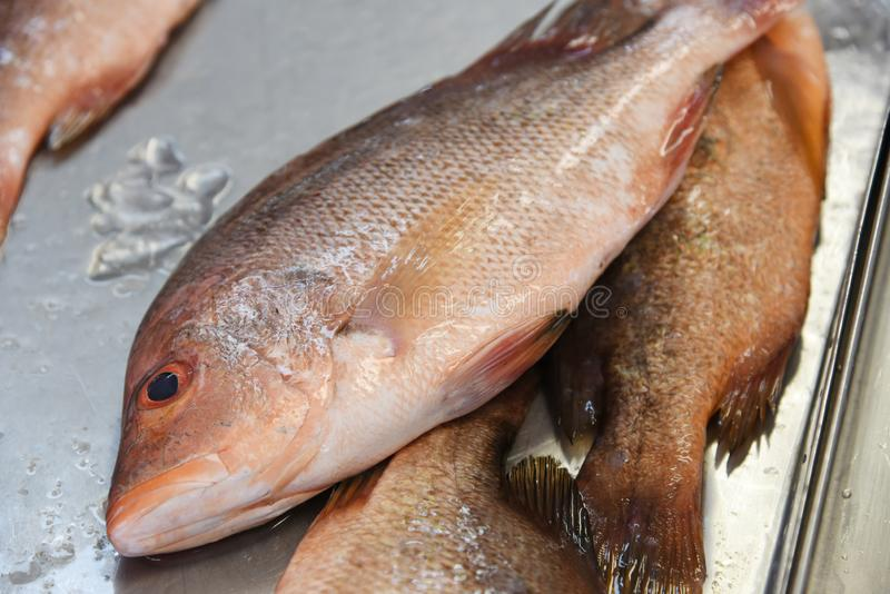 Fish on ice. Assortment of fresh fish on ice in a market royalty free stock photography