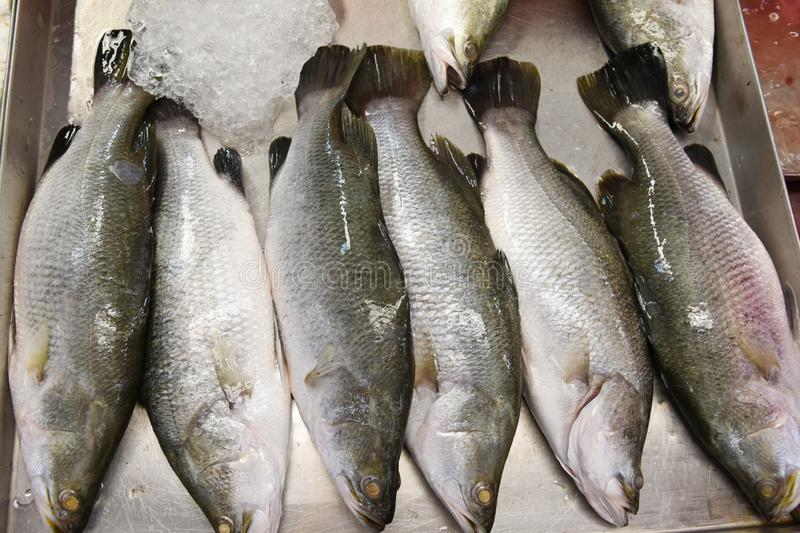 Fish on ice. Assortment of fresh fish on ice in a market stock images