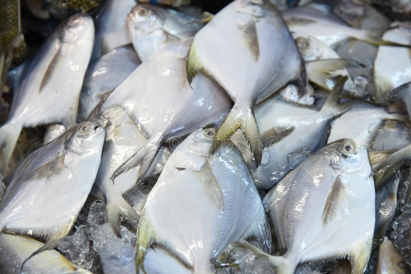 Fish on ice. Assortment of fresh fish on ice in a market royalty free stock images