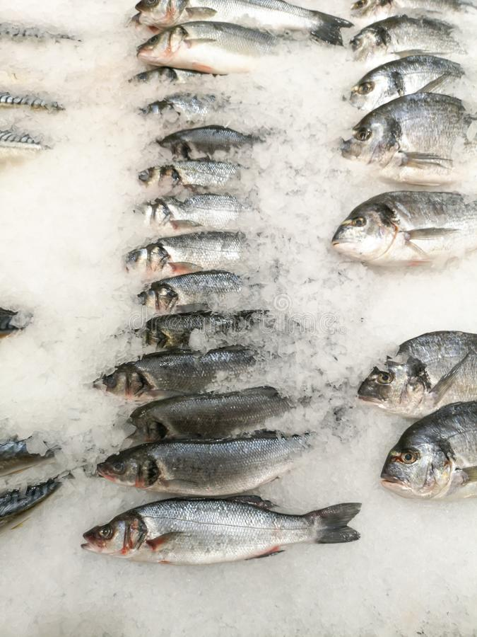 Fish in the ice on the shelf of the market.  royalty free stock photos