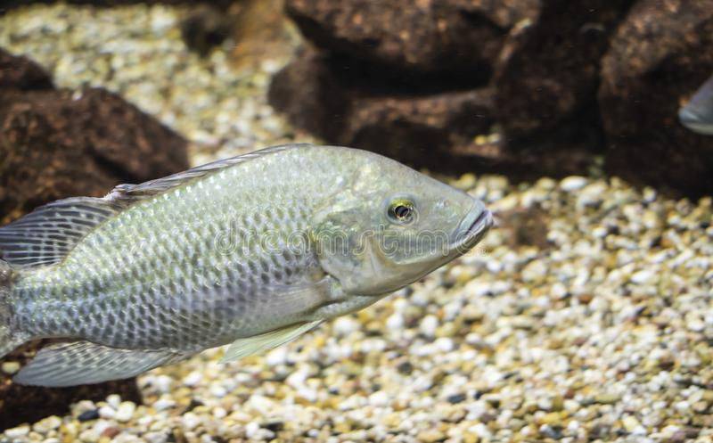 Fish inside an aquarium stock photo