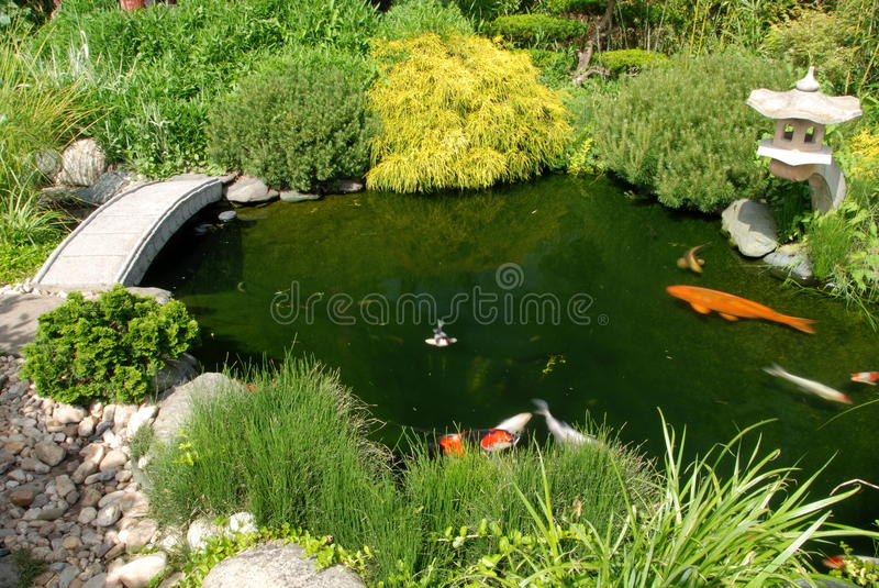 Fish in the Japanese garedn stock images