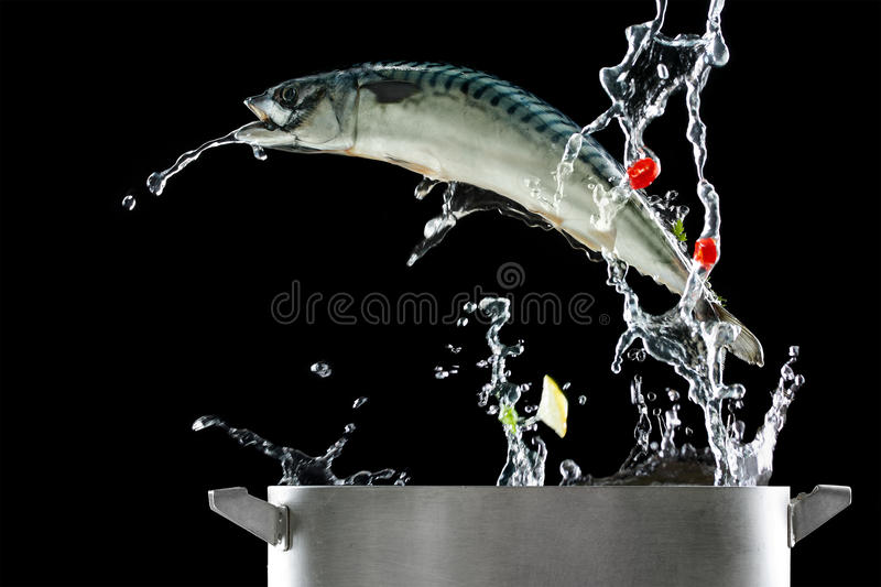 Fish jumping out of pat. Isolated stock photography