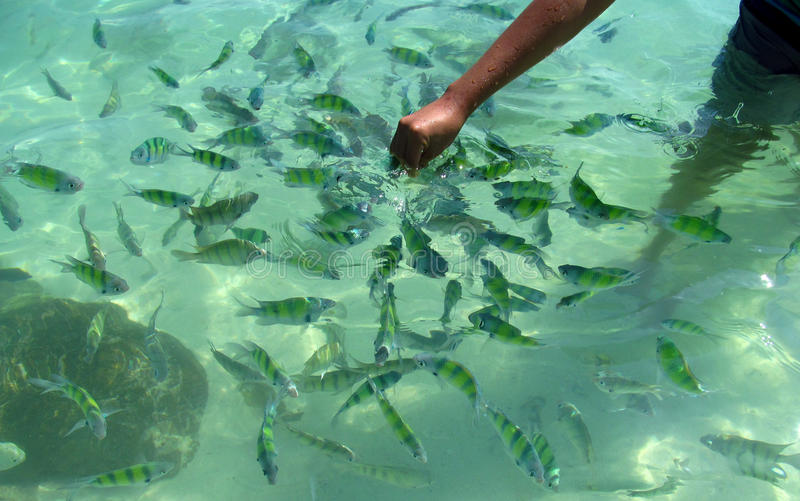 Fish in Krabi Beaches and Islands Thailand stock images