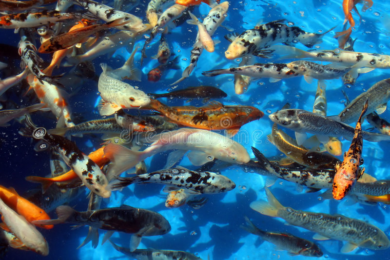 Fish in light blue water stock images