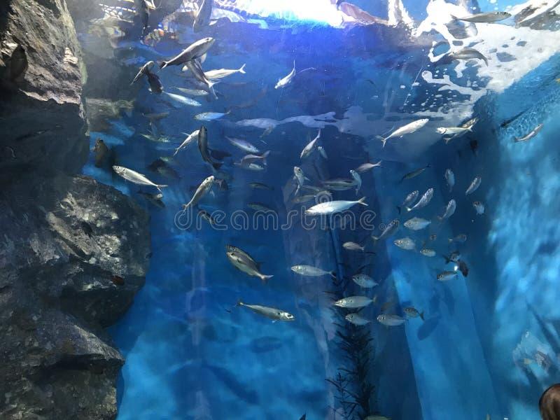 Fish & Light royalty free stock photography