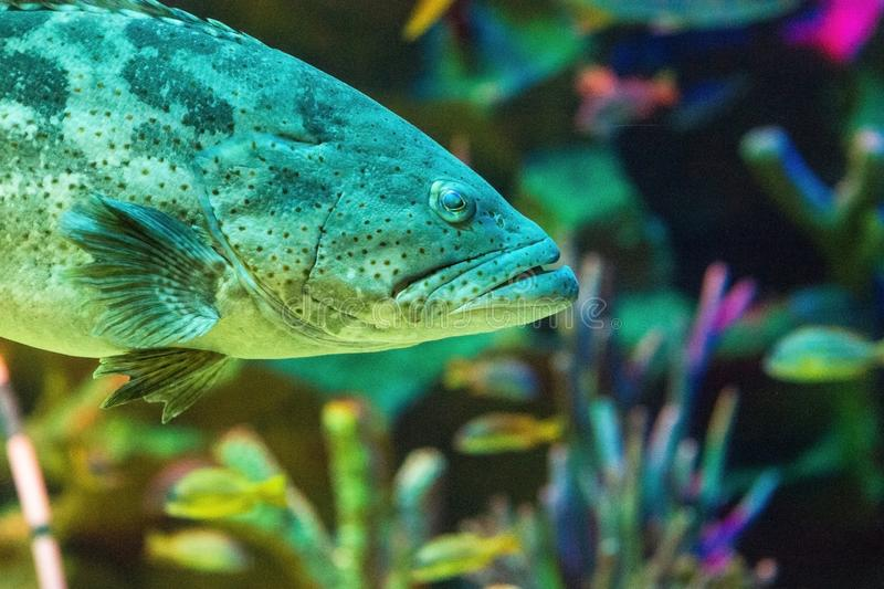 Fish in the marine aquarium. royalty free stock photo
