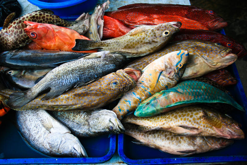 Fish in market. Tropical fish on market stall royalty free stock photo