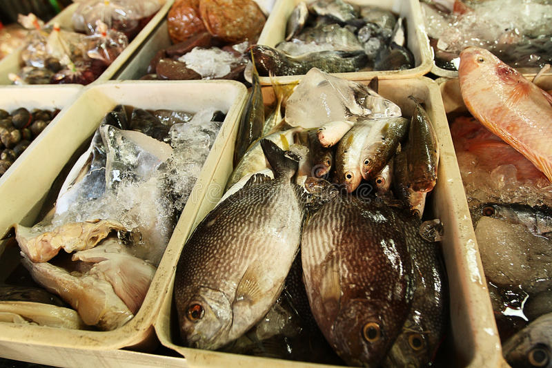 Download Fish market stock photo. Image of clams, dinner, market - 23638188