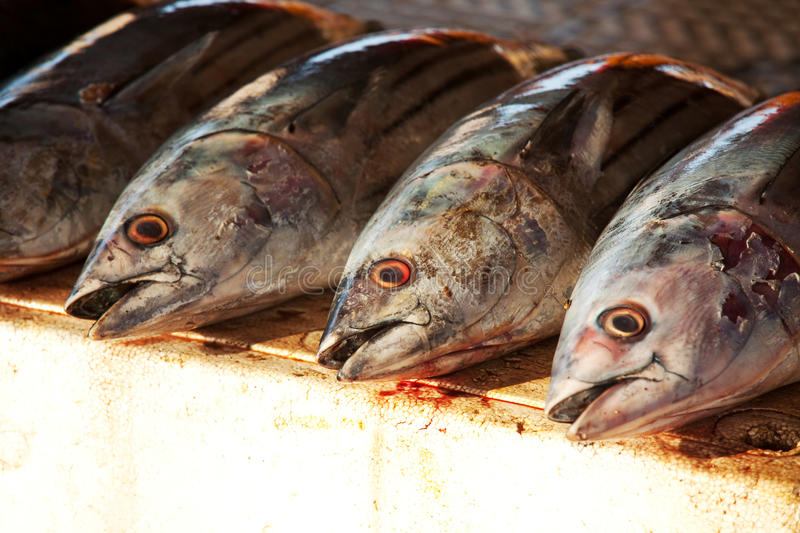 Download Fish market stock image. Image of biodiversity, galle - 25063695