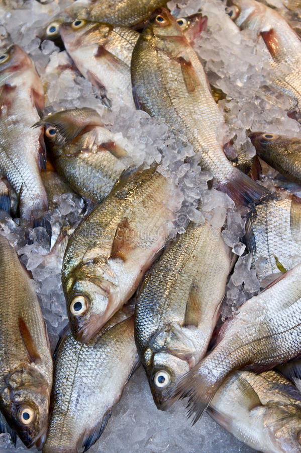 Download Fish Market stock image. Image of chill, chilled, freeze - 26405659