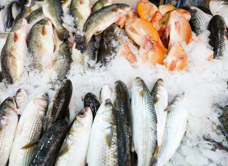 Fish at the market. Fish on ice at Mahane Yehuda, famous market in Jerusalem royalty free stock photos