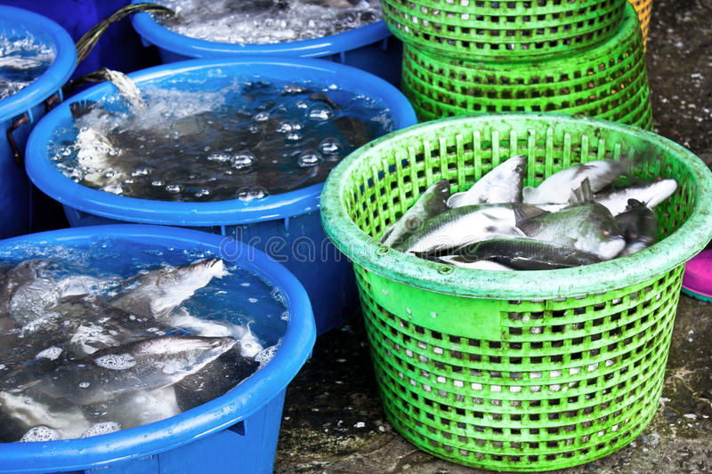 Fish market. Fishermen Catch Seafood Market sold royalty free stock images