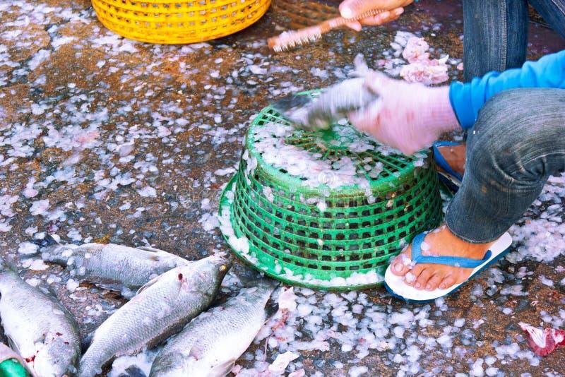 Fish market. Fishermen Catch Seafood Market sold royalty free stock photo