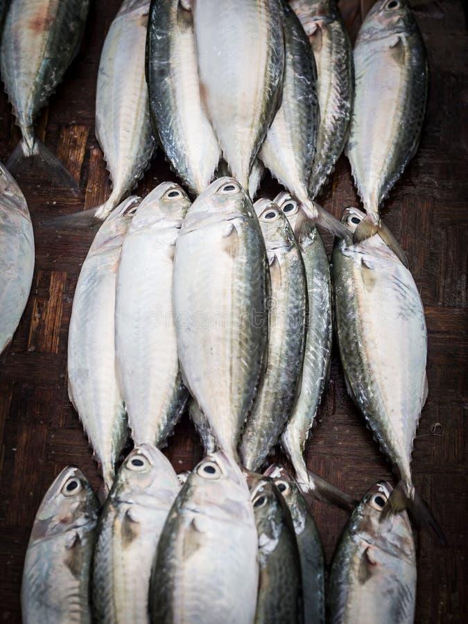 Fish market. Fresh mackerels sold on the fish market in Dar es Salaam, Tanzania royalty free stock image