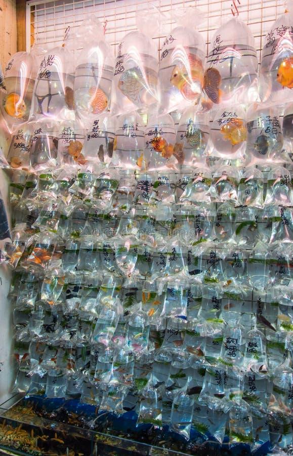 Free Fish Market In Hong Kong, China Royalty Free Stock Images - 87379999