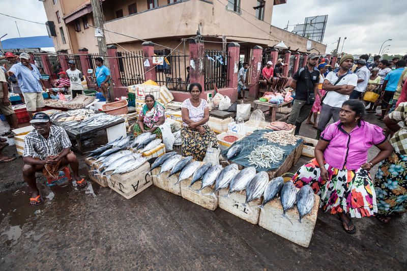 Fish market. Negombo, Sri Lanka. It is approximately 35 km north of Colombo City. Negombo is known for its huge and old fishing industry with busy fish markets royalty free stock images