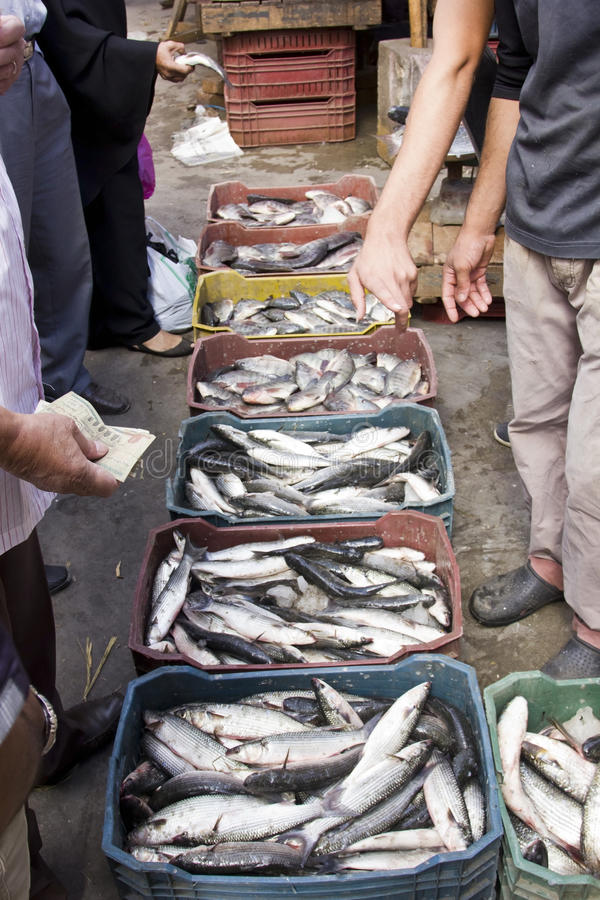 Fish market stock photo image of seafood money people for Fish for cash