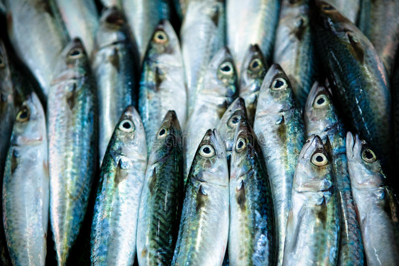 Fish Market. Pile of Fish For Sale at Market stock images