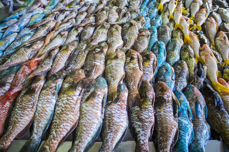 Fish in a market. In Polynesia royalty free stock photo