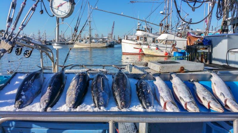 Fish Market. In Steveston Village, Richmond, BC, Canada stock photos