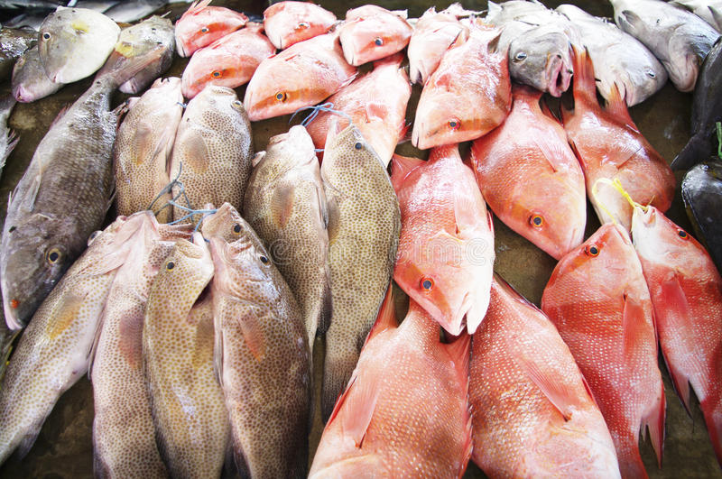 Download At The Fish Market In Victoria, Seychelles Royalty Free Stock Images - Image: 28250039
